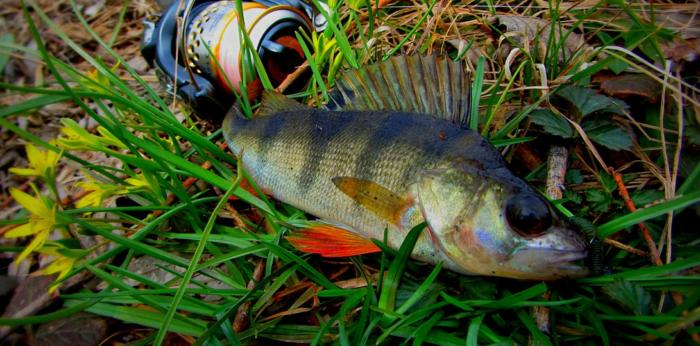 fishing-svityaz